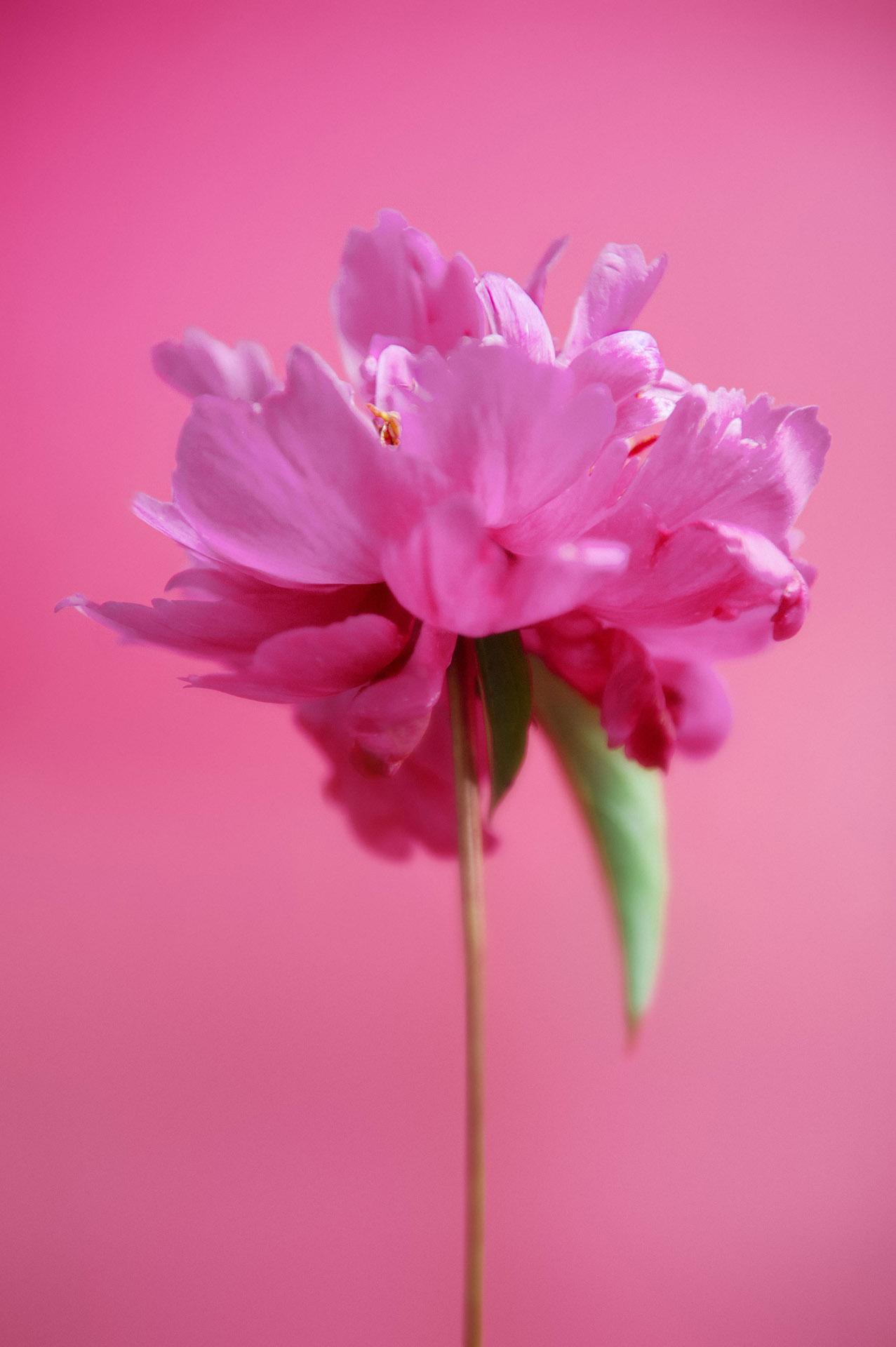 Flower Power - agent mel - sarah aubel